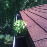 Maintain gutters